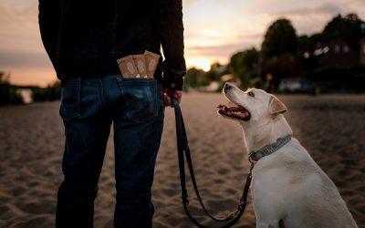 Saubere Idee: Hundekot-Schachtel aus Pappe